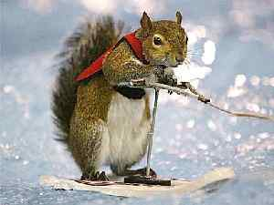waterski_squirrel.jpg